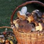 funghi-cestino